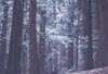Snow in the Forest No.23 by Bruce Haanstra